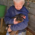 How to get a chicken to lay eggs!
