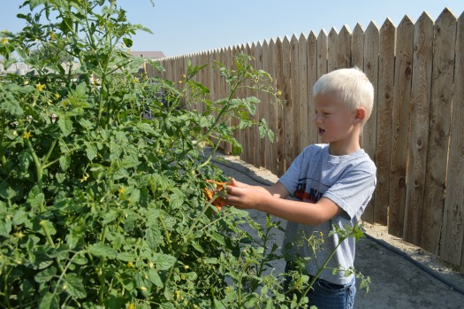 Tips on Getting a Cherry Tomato Plant to Produce Better