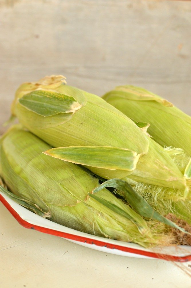 fresh corn on the cob in the husks sitting on a white platter with red trim