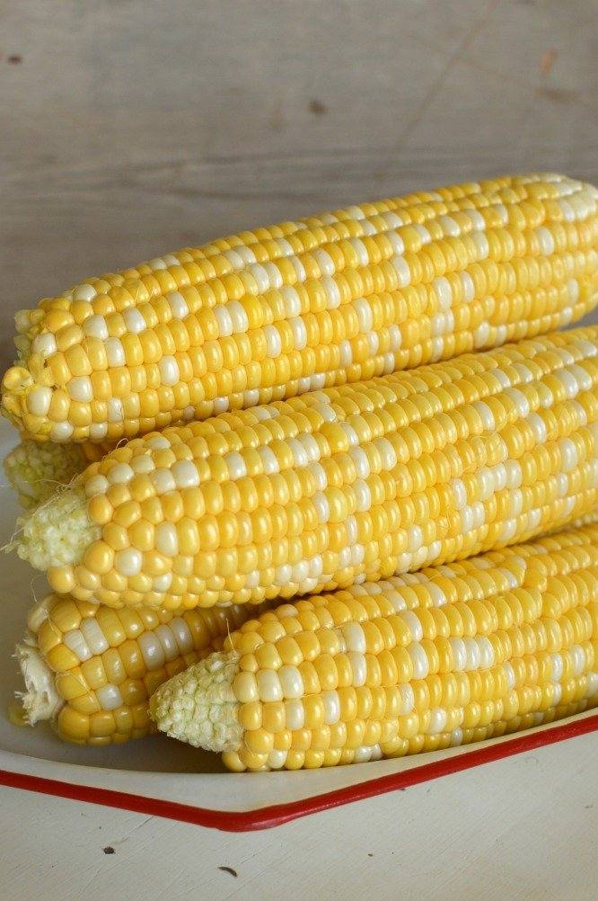 Ears of husked sweet corn on a red and white platter