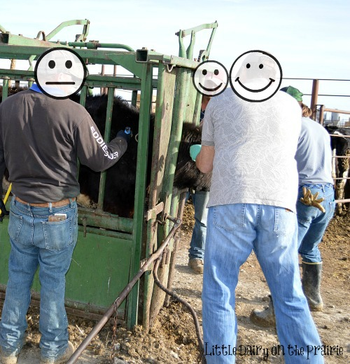 Is this a four man job  Little Dairy on the Prairie