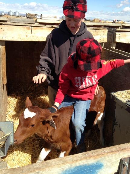 Ride 'em cowboy!  Little Dairy on the Prairie