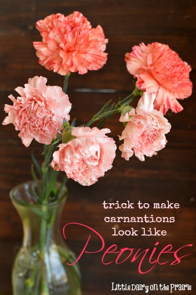 A simple way to transform inexpensive carnations into peonies. Beautiful! Little Dairy on the Prairie