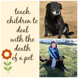 How to deal with the death of a pet