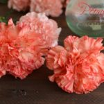 Peonies on Carnations Budget