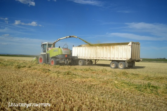 Loading the truck with silage