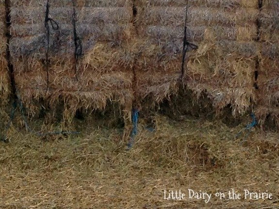 Rabbit infested haystack
