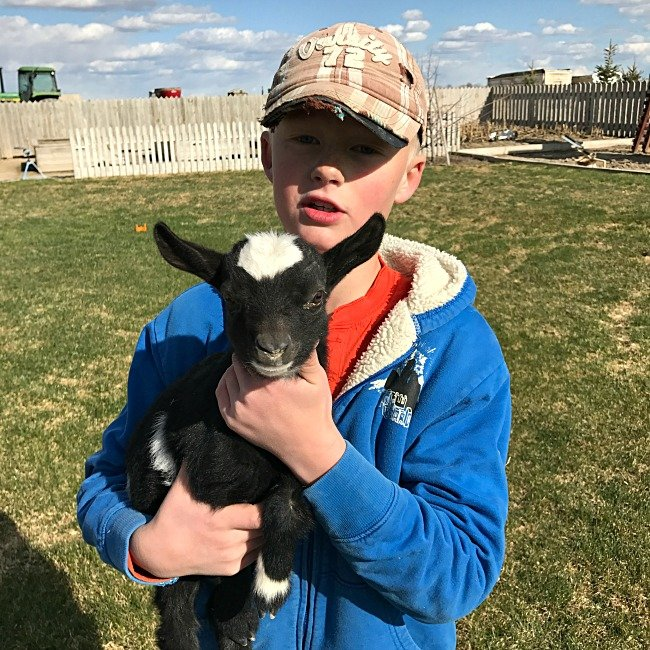 Payson and the baby goat
