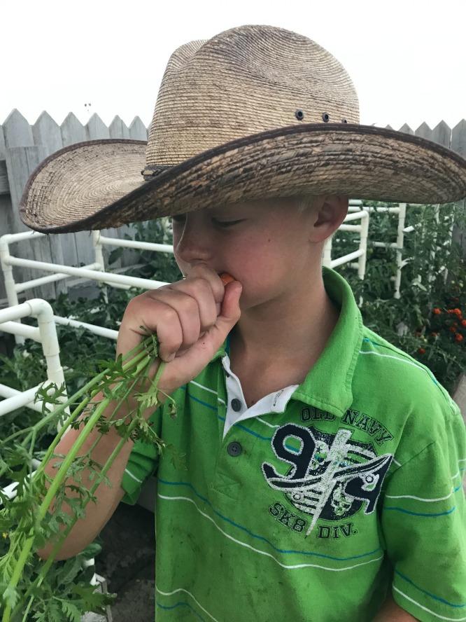 Dilly Dip - little boys love carrots