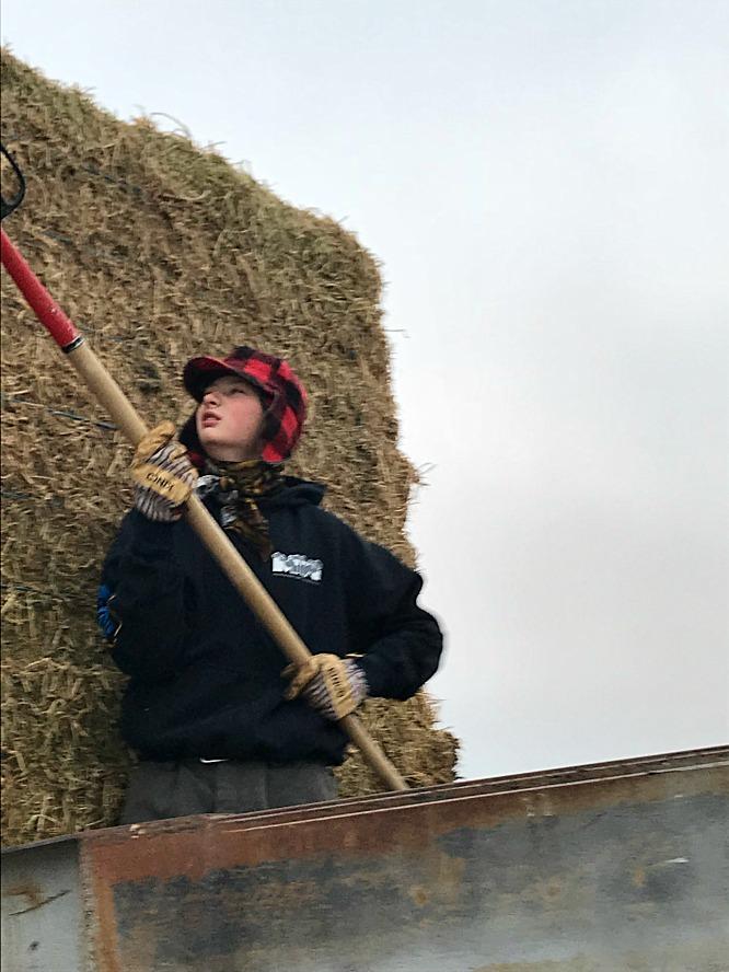 S'mores Smoothie - Branson feeding cows