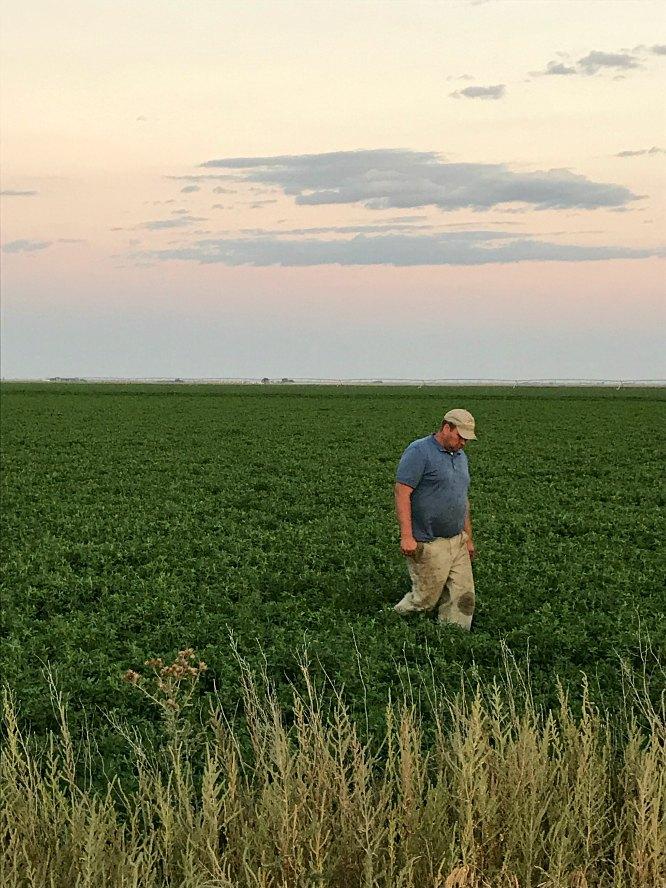 A farmer walking in his field